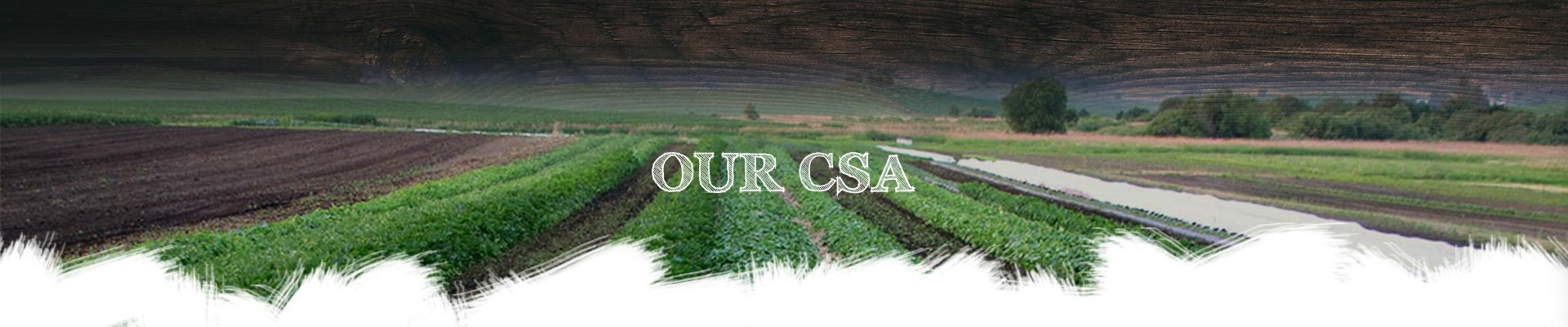 ourcsa