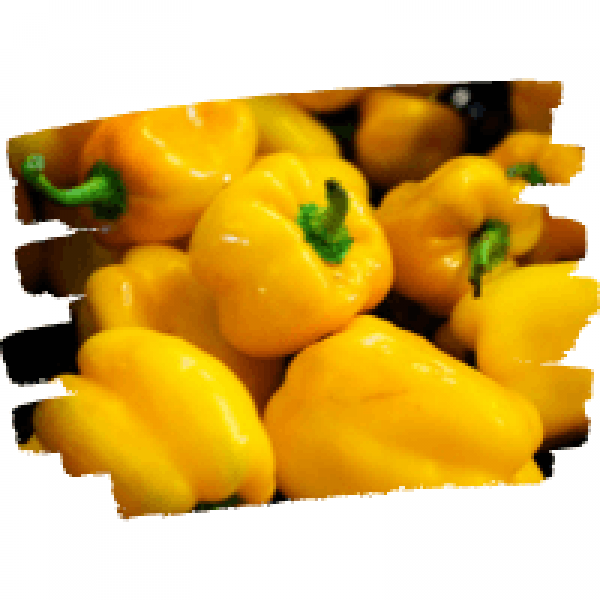 yellow-bell-icon